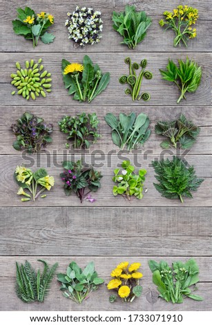 Edible plants and flowers, fresh spring harvest on a wooden rustic background. Medicinal herbs and wild edible plants growing in early spring. With copyspace.  Photo stock ©