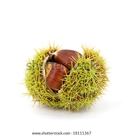Edible Ripe Chestnuts On The White Background.