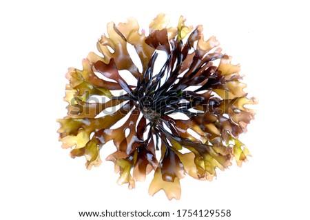 Photo of  edible seaweed on white background