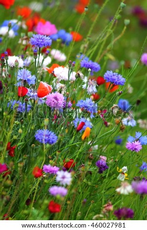Edible white purple and blue flowers on the cornflower meadow in edible white purple and blue flowers on the cornflower meadow in slow food garden mightylinksfo