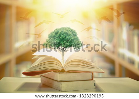 education concept with tree of knowledge planting on opening old big book in library with textbook, stack piles of text archive and aisle of bookshelves in school study class room  #1323290195