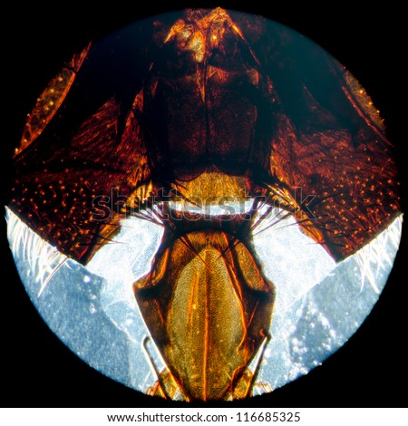education science microscopy micrograph animal insect fly head