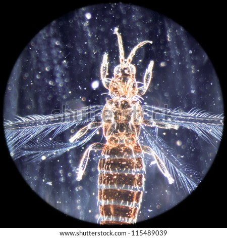 education science microscopy micrograph animal insect, Magnification 50X