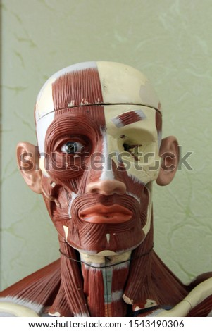Educational object: human head with the designation of different biological zones, shot close-up in biology class