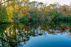 Edward Ball Wakulla Springs State Park. The world's largest and deepest freshwater springs. The black lagoon.
