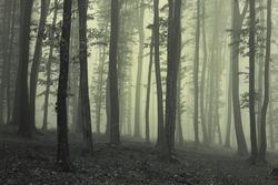 eerie green forest landscape in fog