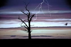 Eerie Lightning Tree