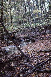 eerie woods in autumn