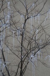 Eery tree, covered in icicles. Frozen icicle tree. Large icicles dripping off barren tree. Isolated.