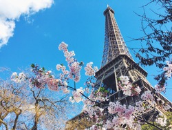 effiel tower with sakura