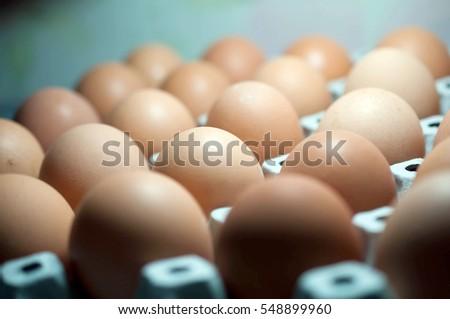 egg #548899960