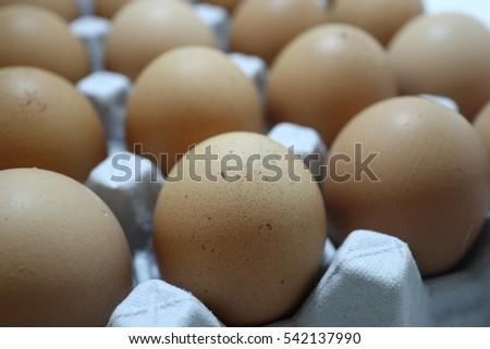 egg and avian influenza #542137990