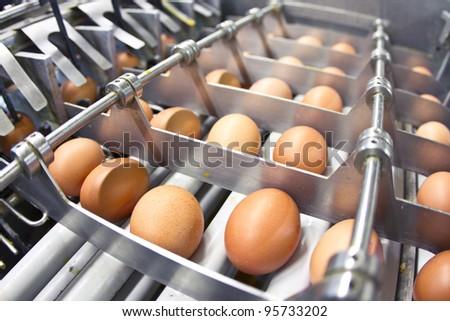 Egg farm - industrial packaging