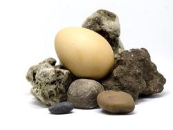 Egg in nest stone on white background.
