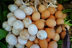 Egg is an oval or rounded body surrounded by a shell by duck or chicken that is eaten as food. Shell of duck egg is white and larger by dimension, chicken is brown and smaller.