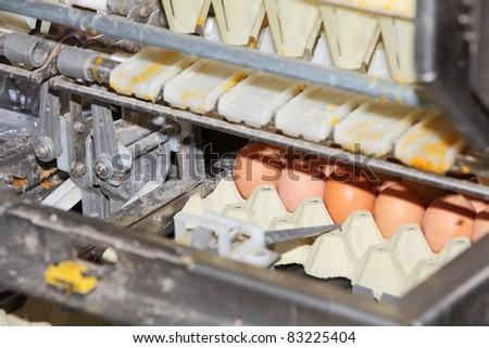 Egg packaging technology - stock photo