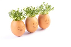 egg shells with faces drawn on ,Easter eggs, fresh sprouts in an egg shell, sprout heads, watercress hair
