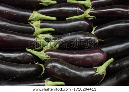 eggplant, black eggplant, lined up, showcase Foto stock ©