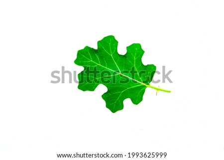eggplant leaves on a white background