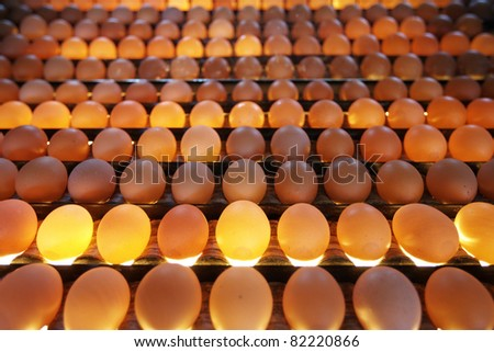 Eggs in lighting control quality in egg factory - selective focus