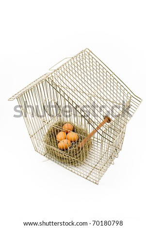 Eggs in Nest confined in Bird Cage isolated on white