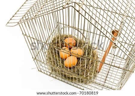 Eggs in Nest confined in Bird Cage isolated on with