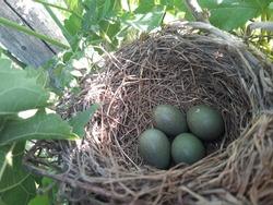 Eggs in the bird's nest. Crow's nest. Birdhouse in the tree.