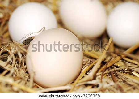 Eggs on a fowl hay nest