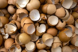 Eggshell waste for recycle For environmental protection and utilization