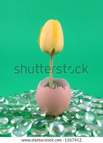 eggshell with yellow tulip on green background