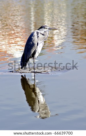 Egret standing in the water with amazing colors
