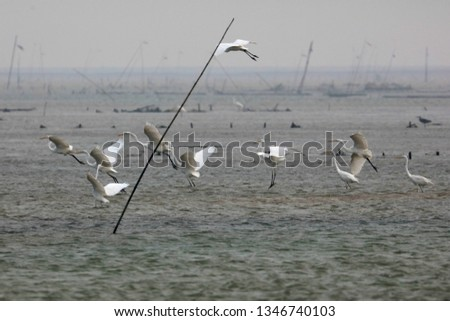 Egrets fly to catch fish in China's inner lake in winterGong yiping takes a picture of egrets flying for fishing in dongting lake, hunan province, China On December 23, 2018: the winter of dongting