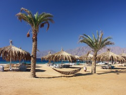 Egypt - beach with palms and hammock near Red Sea