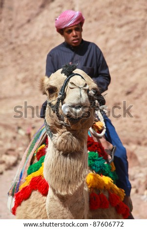 EGYPT - FEBRUARY 5: Camel guide climbs up to Mount Sinai on February 5, 2011 in St Catherine's district, Egypt. Camels are often used to assist fatigued tourists climbing the 2285m summit.