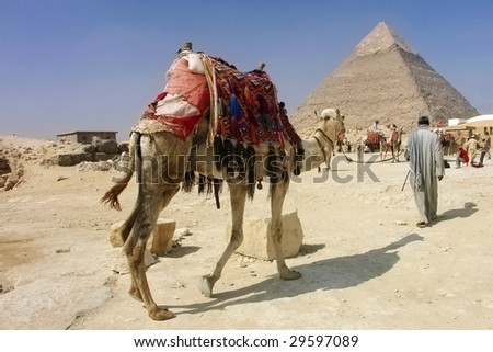 Egypt - Khafra's Pyramid with camel of Giza, Cairo