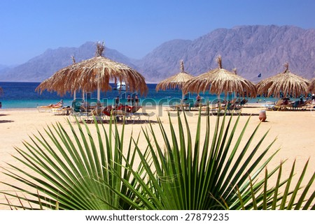 Egypt Nuweiba - beach with palm and umbrella at Reds sea