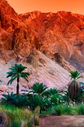 Egypt oasis in the sinai mountains and dessert