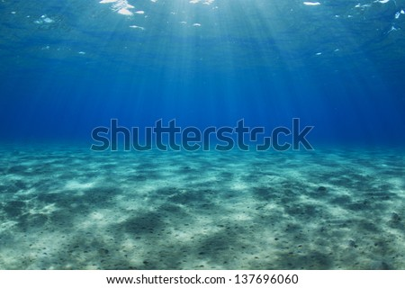 Egypt, Red Sea Shallow water ocean bed. / Underwater landscape