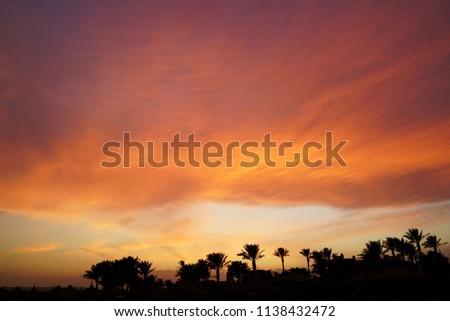 Egypt. Sunset in the Tropics                                #1138432472