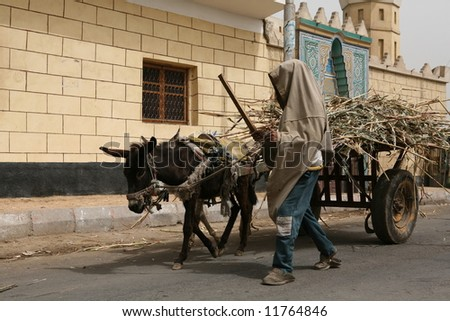 Egyptian boy with a cart of sugar cane.