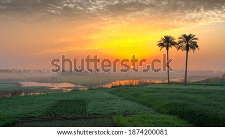 Egyptian countryside colorful sunrise view in a foggy day. Two palm trees in a big field and a water channel. Foto stock ©