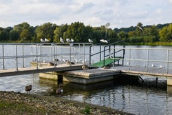 Egyptian Geese and other waterfowl on a jetty at Whittlingham Lake in Norfolk, UK