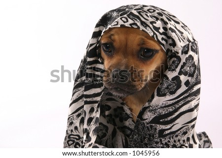 Egyptian puppy