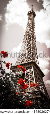 eiffel tower and red rose shrub....