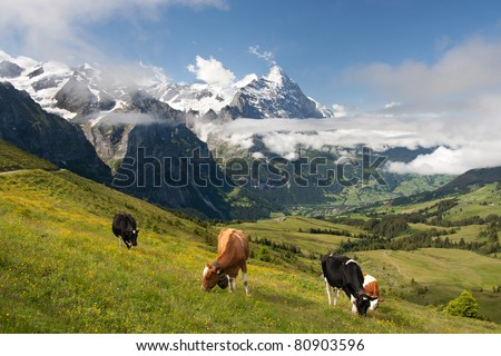 Eiger, Schreckhorn and neighborhood in Berner Alpen, Switzerland