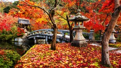 Eikando or Eikan-do Zenrinji shrine and bridge with red, yellow maple carpet at peak autumn foliage color during late November in Kyoto, Japan. Famous landmark to see fall leaf with beautiful garden.