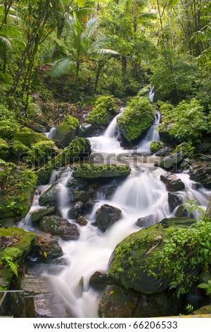 El Yunque river stream Puerto Rico.