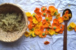elder flower in a wicker basket and calendula flowers on a white canvas and next to a wooden spoon with herbs. folk medicine and medicinal properties of plants