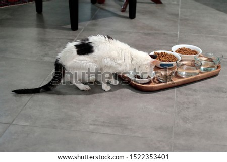 Elderly feline domestic pet eating food from one of many bowls of food and water in a wooden tray. Wooden tray on floor holds cat food and water dish containers that an older female cat eats from. #1522353401