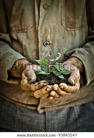Elderly man hands holding a green young plant. Symbol of spring and ecology concept